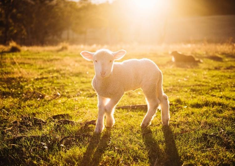 [video] Ewangelia na IV Niedzielę Wielkanocną [Niedzielę Dobrego Pasterza] z komentarzem