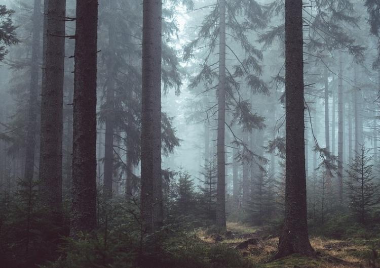 Chorego pracownika wywiozła do lasu, mężczyzna zmarł. Ludzie dobrej woli chcą pomóc jego dzieciom