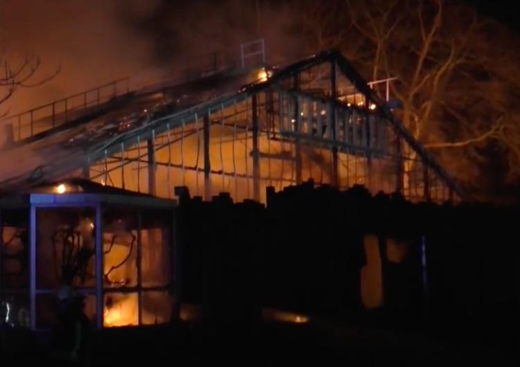 Spłonęły szympansy, orangutany i goryle. Tragiczny pożar w niemieckim ZOO